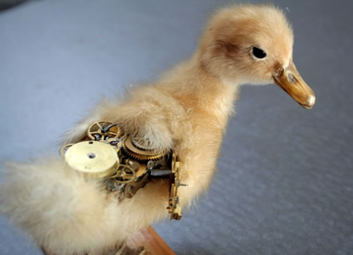 Steampunk Taxidermy - duck