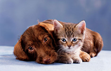 Contented cats and dogs with healthy coats