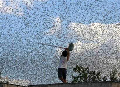 term paper on locusts If you need a custom term paper on society term papers:  locusts and the first-born) 2) some of these warnings take place in the early morning by the banks of the.
