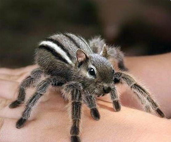 chipmunk-spider-870.jpg