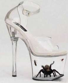 tarantula-in-freaky-shoes.jpeg