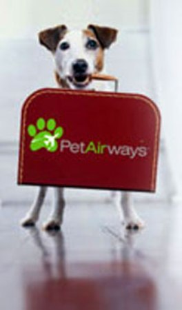 Pet Airways: First Pets-Only Airline Set To Take Off