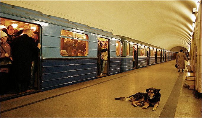 Wild Dogs Take The Subway To Commute In Russia