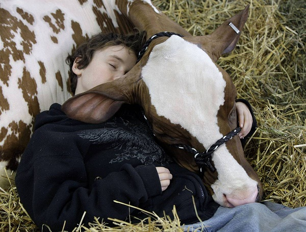 For the love of cow 676