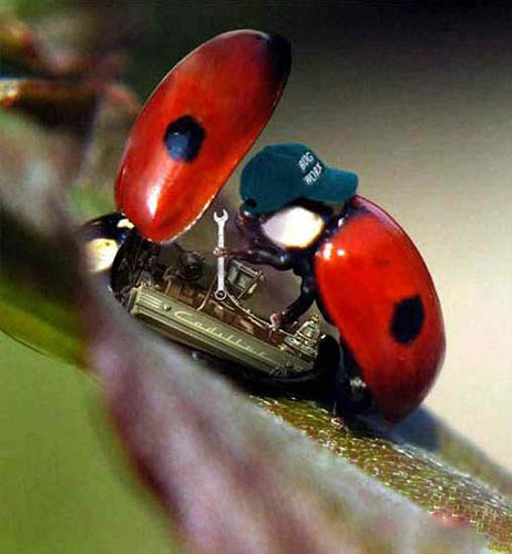 Lady Bug Repair 010