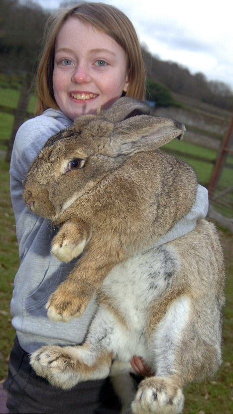 Massive Rabbit 661