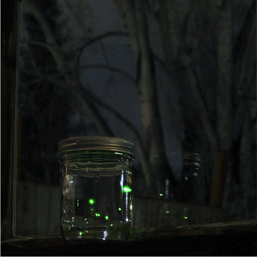 Jar-of-Fireflies