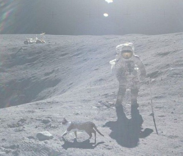 [Image: Moon-Cat-449.jpg]
