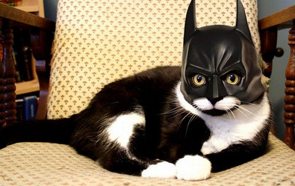 Batman Cat 399