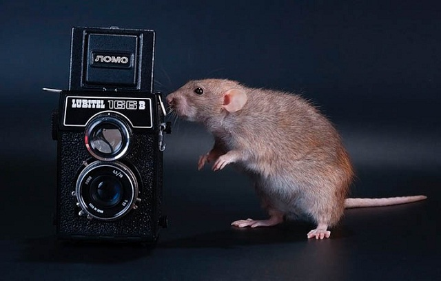 Camera Mouse 588