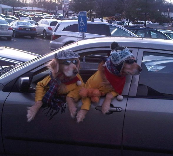 Cool Dogs 562