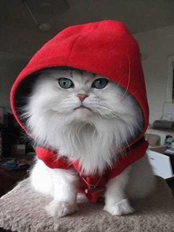 Little Red Riding Cat 389