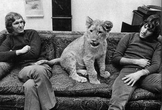 christian-the-lion-with-friends-lg