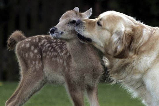 dog-and-deer