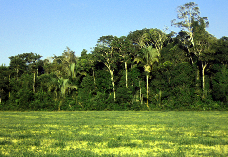 deforested-field-amazon