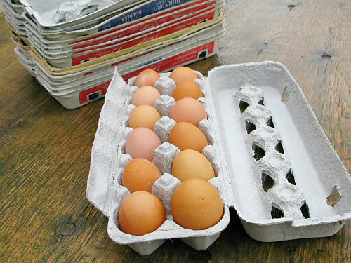eggs_and_cartons