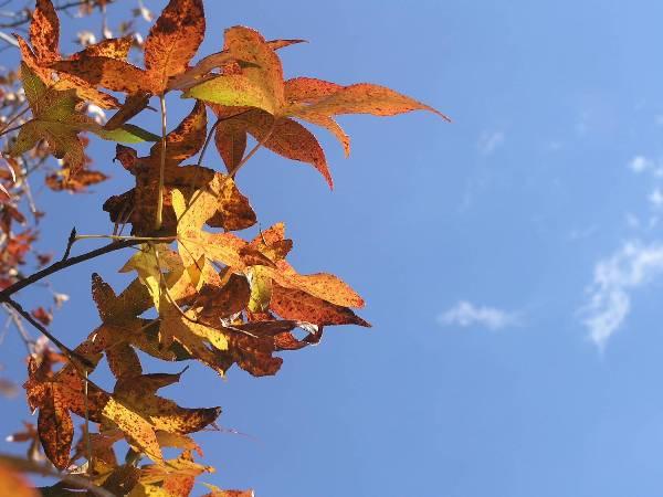 heat-wave-change-trees-colors