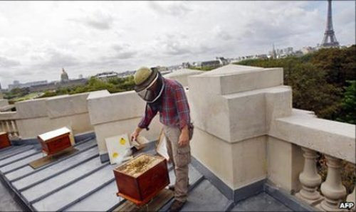 urban-bees-rooftop-hive-paris