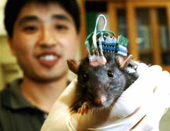 rat-brain-implant