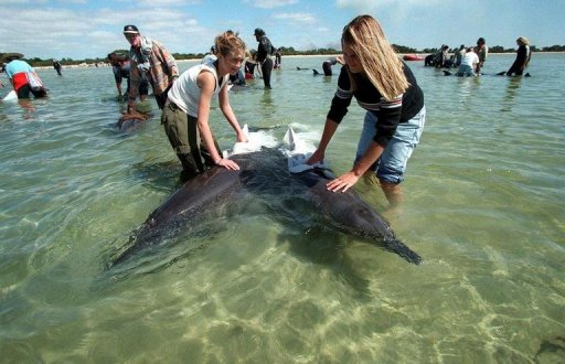 stranded dolphin