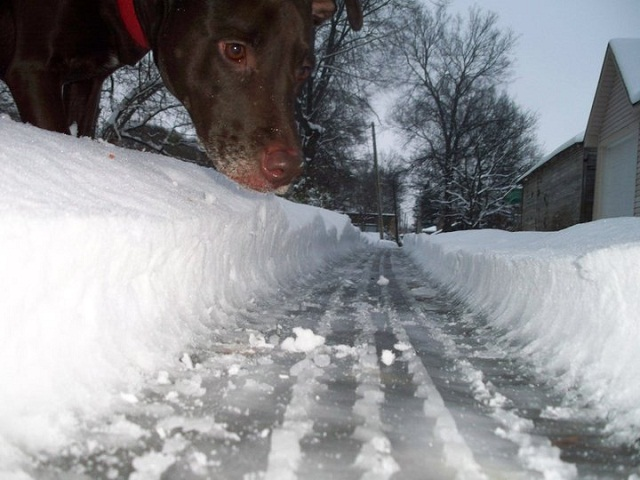 Snow plow cleared the street, then a giant dog showed up
