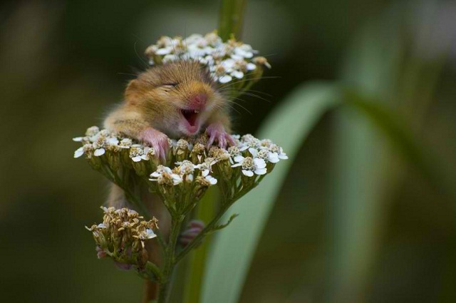 Flower Mouse 463