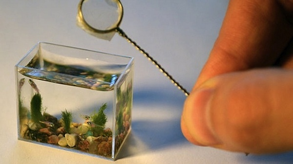 xlarge_the-smallest-aquarium