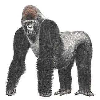 primate 56789wiext