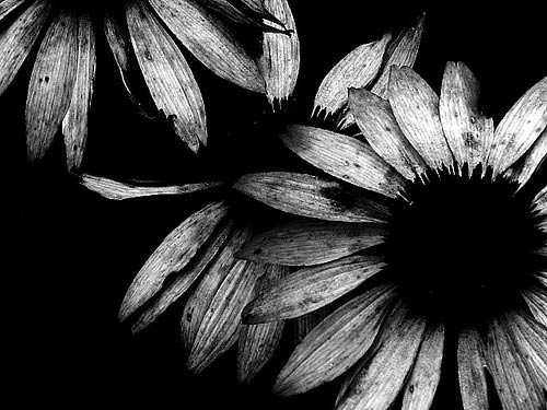 black and white 25