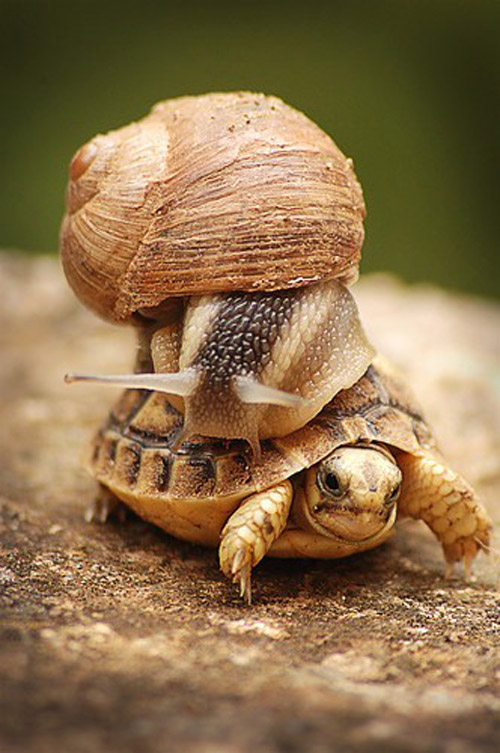 turtle-and-snail-double stack 782