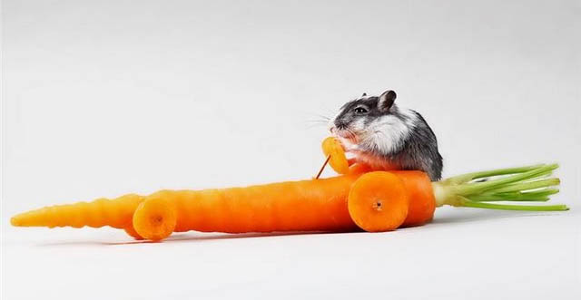 Carrot Mouse 287