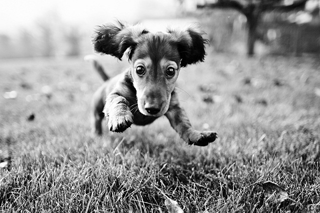 Incoming Puppy 906