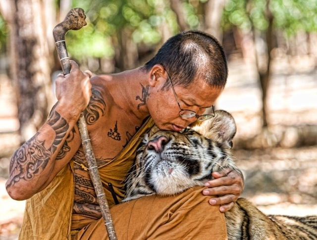 Buddhist monk and tiger 033