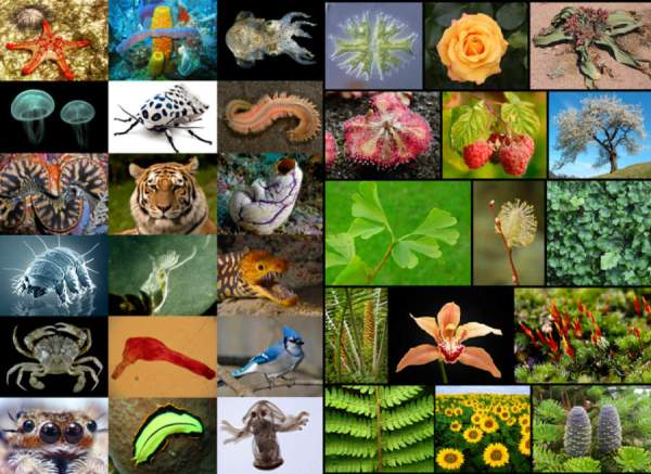 Earth-is-home-to-8_7-million-species