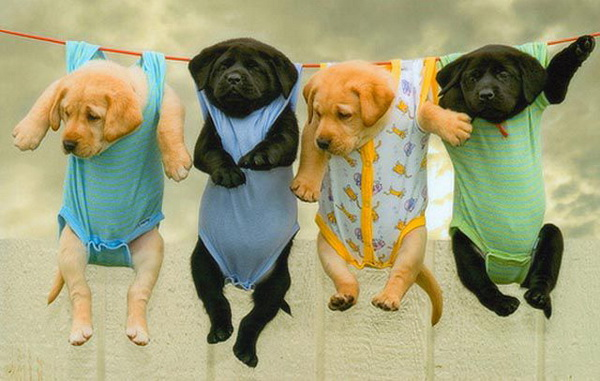 Drying-puppies 788