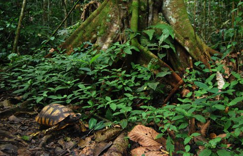 Yasuni_National_Park.png.492x0_q85_crop-smart