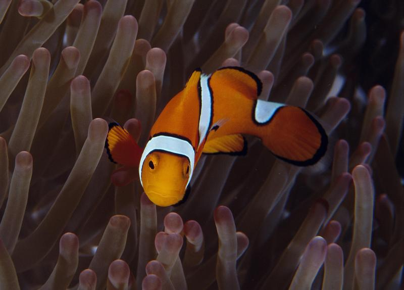 clownfish 120120184233-large