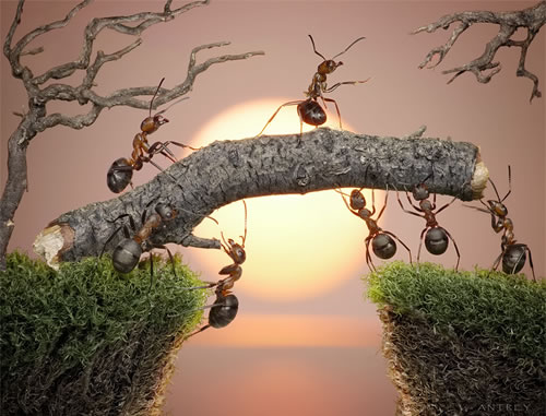 ant-tales-2