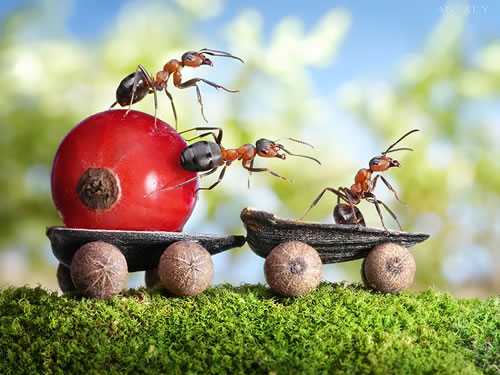 ant-tales-4