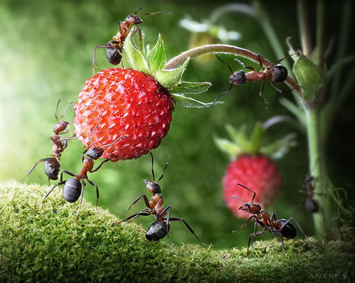 ant-tales-5