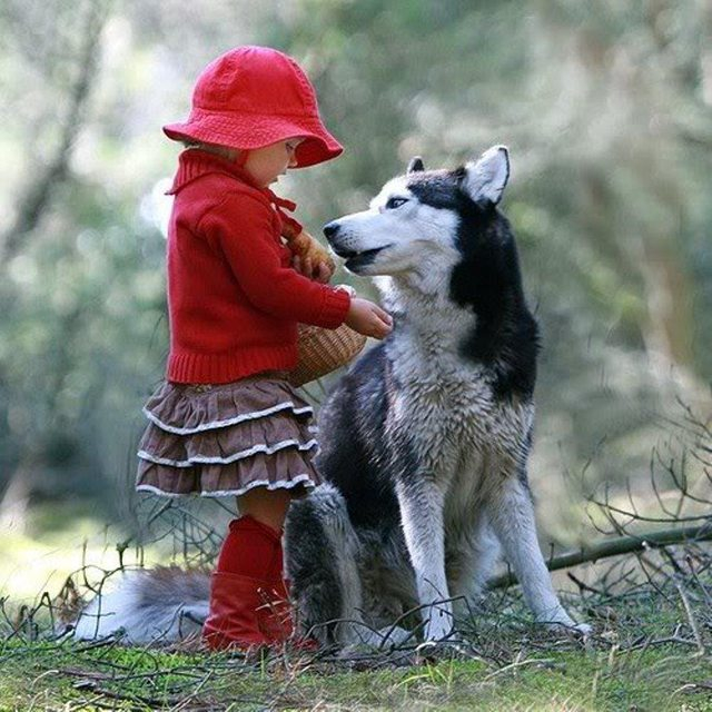 Little Red Riding Hood 505
