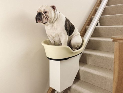 dog-stairlift1