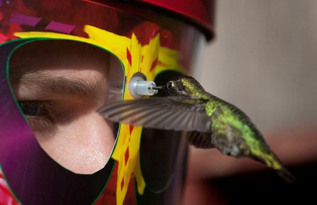 Hummingbird Feeder That You Wear on Your Face 427