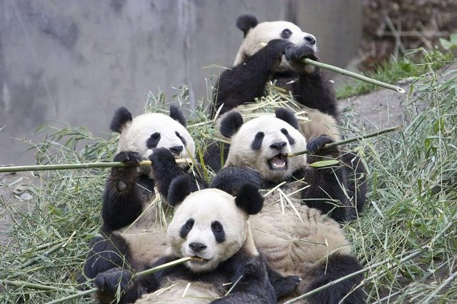 The great panda flute orchestra 681