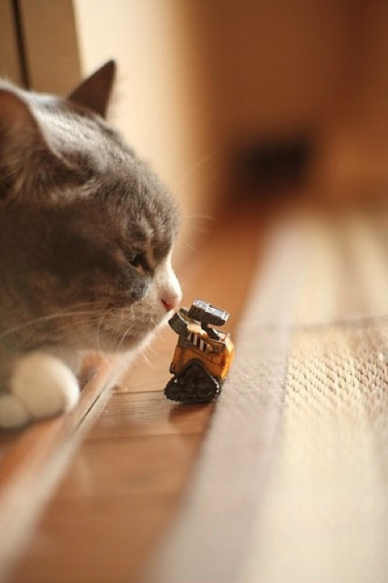 Wall-e meets giant cat 871