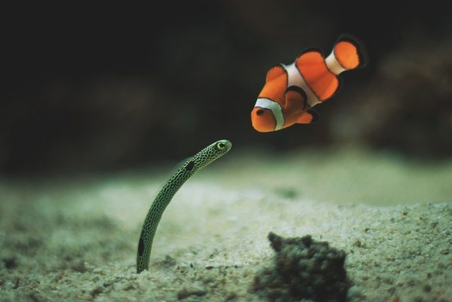 I'm looking for my son, Nemo 823