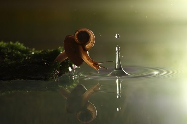 Snail and the Drop of Rain 458