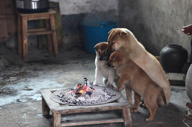 Mom and her pups staying warm in cold Chinese winter 2c3vr