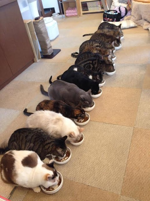 cat cafe in Japan 3f5h