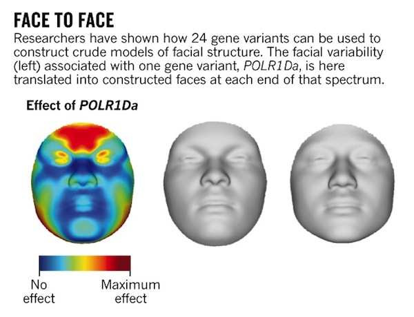facial-morphology